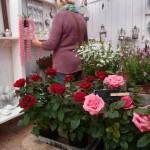 rosor till salu