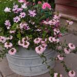 mina blommor vid bron