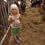 Amanda med kossor