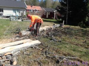 Ulfs skogsarbete ;)